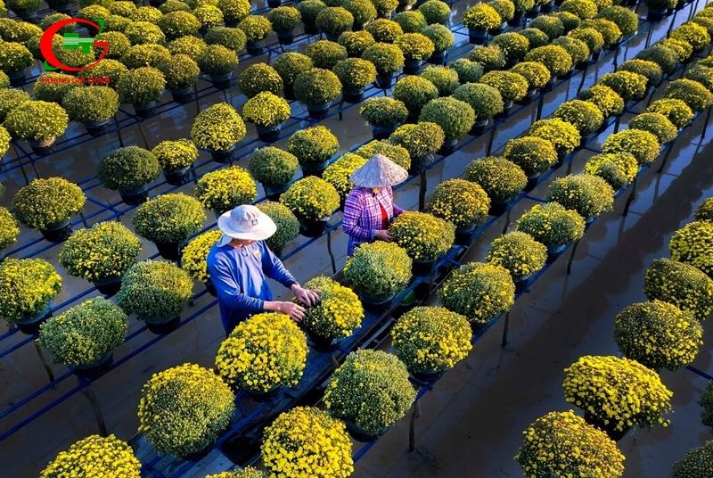 Làng hoa gần Sài Gòn Tân Quý Đông Sa Đéc