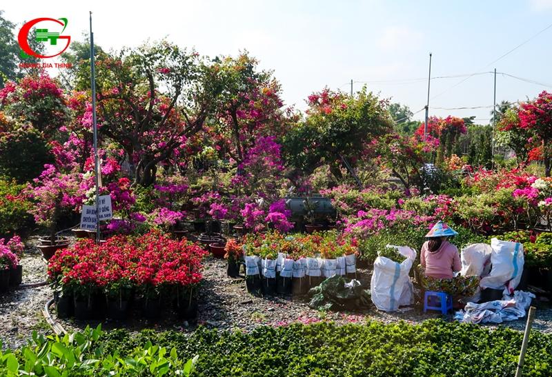Làng hoa gần Sài Gòn Chợ Lách Cái Mơn