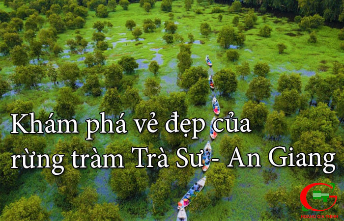 Kham-pha-ve-dep-cua-rung-tram-tra-su-o-an-giang-1