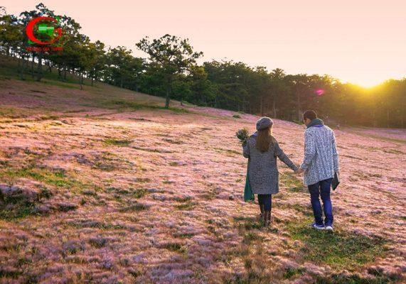 Du lịch Đà Lạt tháng 12 đồi cỏ hồng